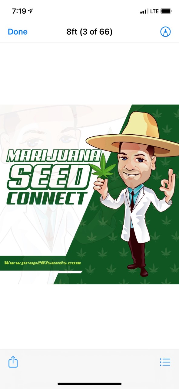 Marijuana Seed Connect