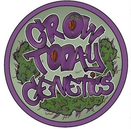 Grow Today Genetics